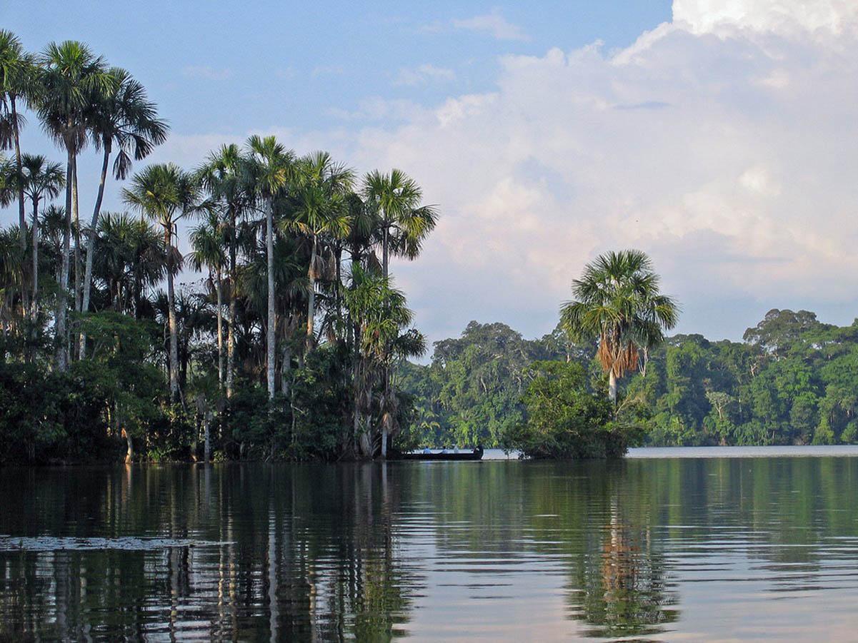 Как добраться до джунглей Амазонки На самолете из Рио-де-Жанейро в