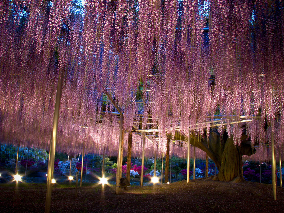 http://eco-turizm.net/wp-content/uploads/2012/09/Ashikaga-flower-park1.jpg