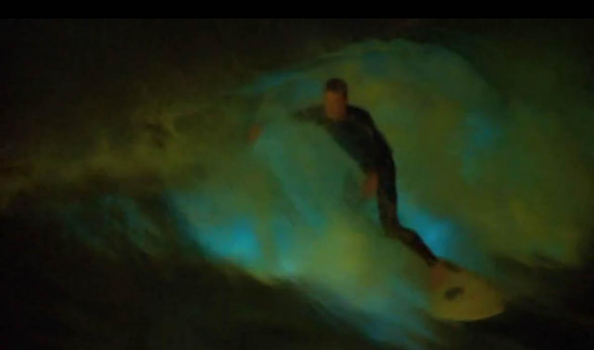 surfing bioluminescent waves