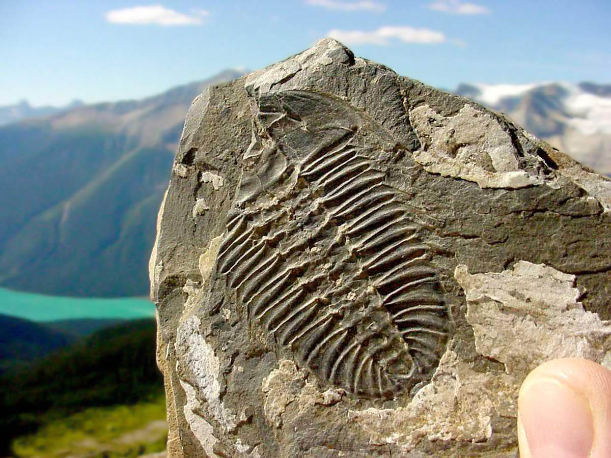 Burgess Shale, National Park Yoho