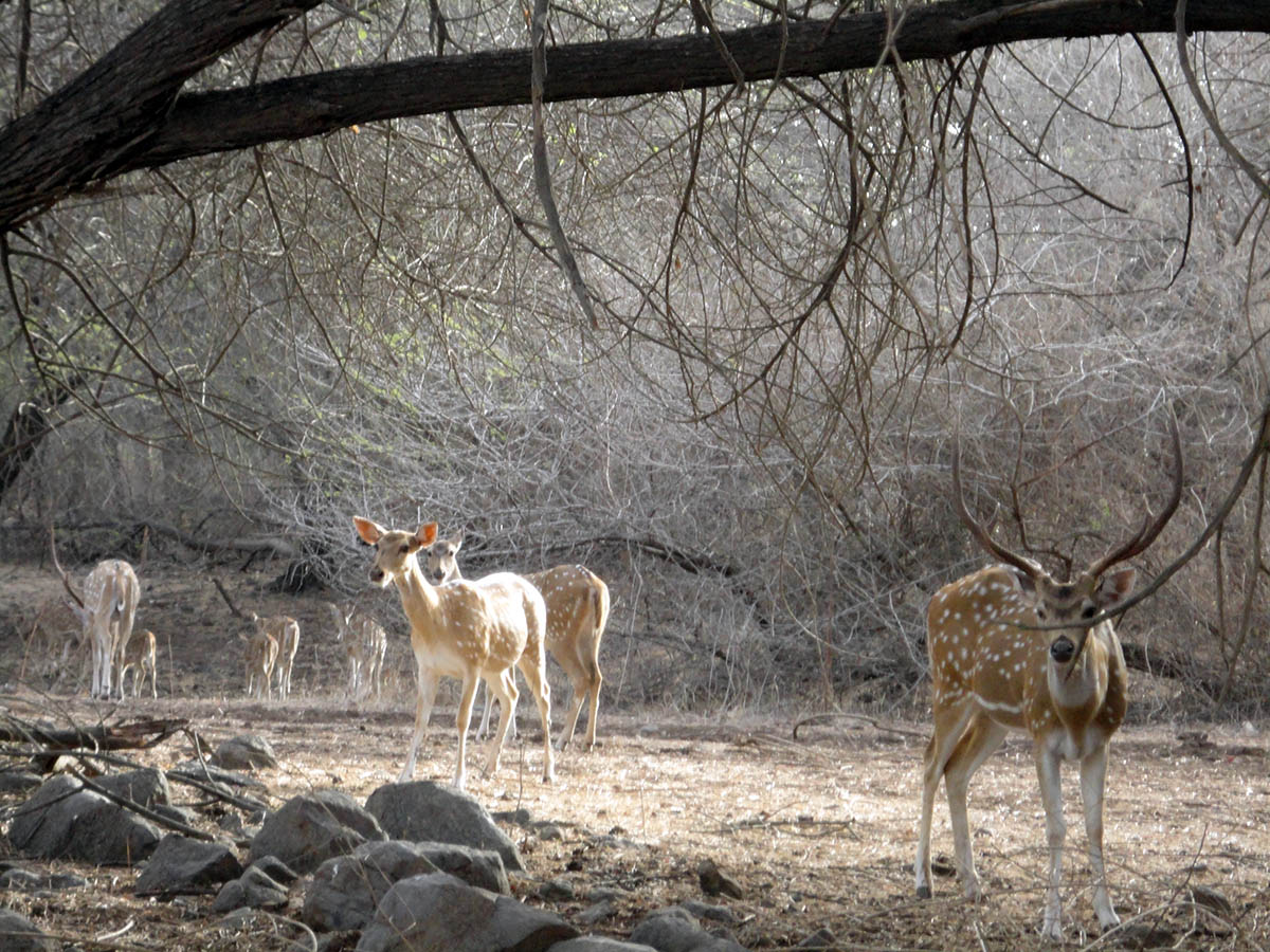 Gir Forest National Park, India