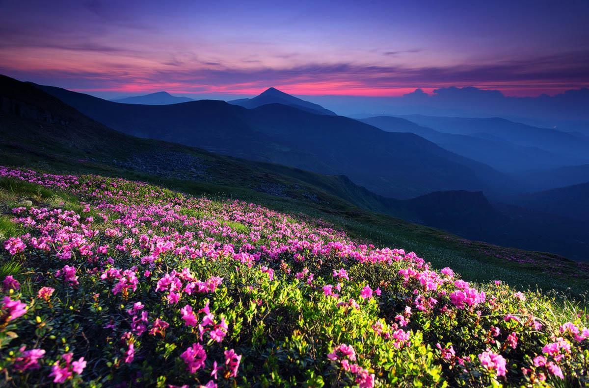 цветущие Карпаты