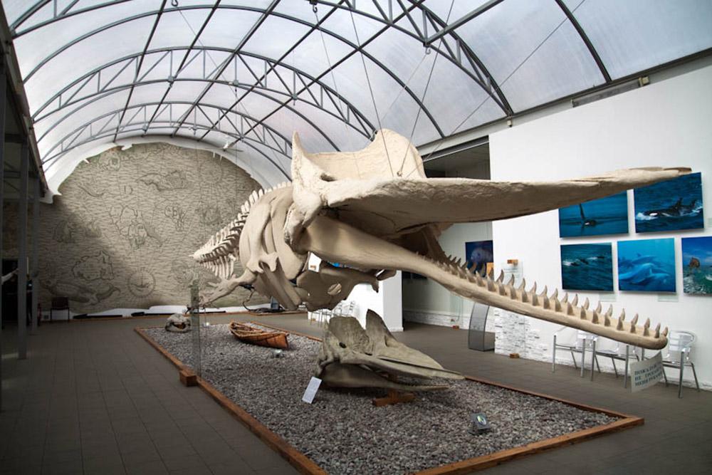экспонат Музея Мирового океана в Калининграде