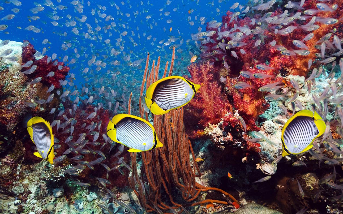 обитатели Красного моря