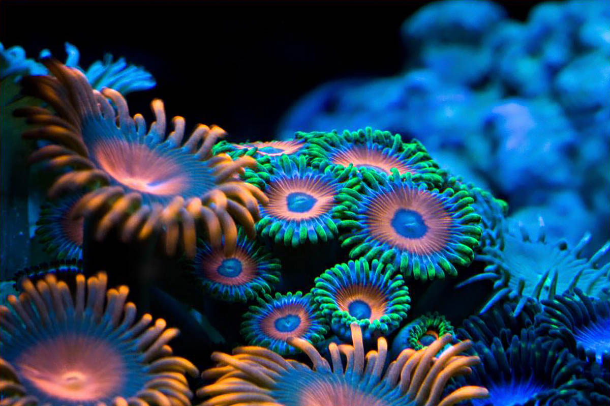 http://eco-turizm.net/uploads/2013/03/Coral-by-Canonnewbe.jpg