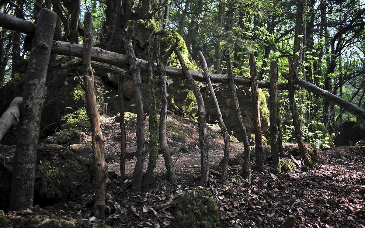 Таинственный сказочный лес в англии