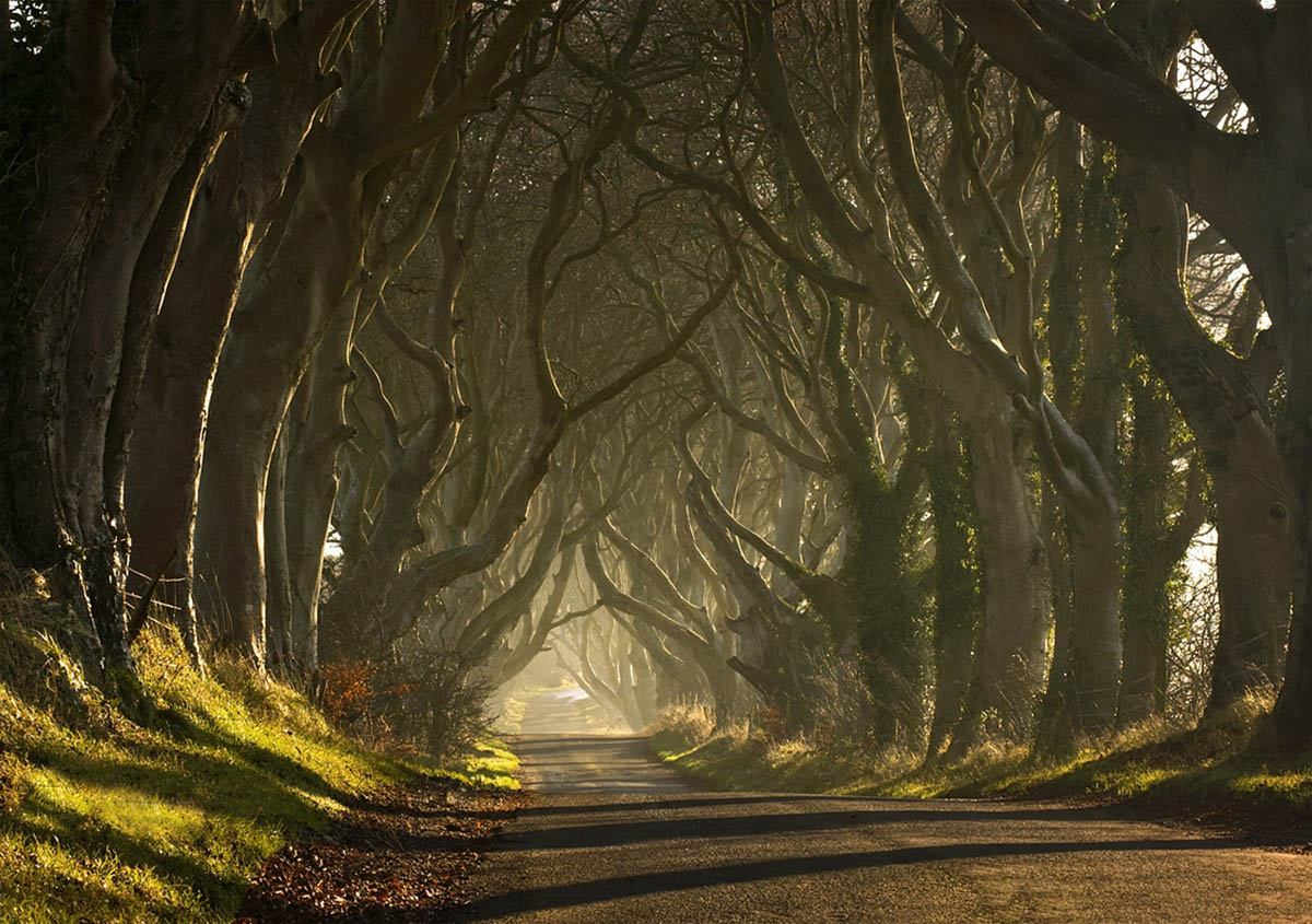 http://eco-turizm.net/wp-content/uploads/2013/03/The-Dark-Hedges-in-Ireland.jpg