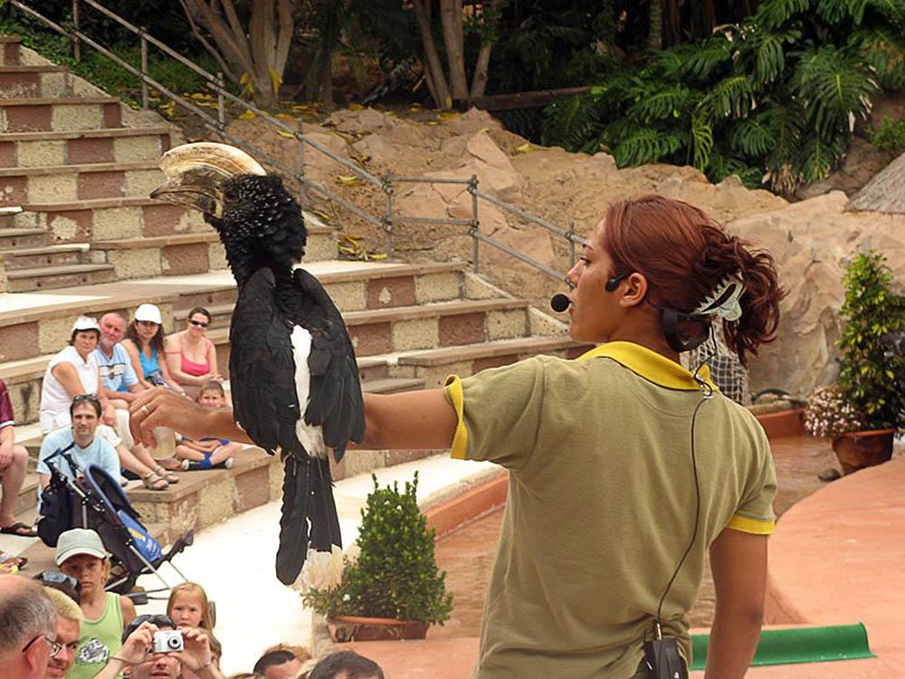 птичье шоу в парке Орлов