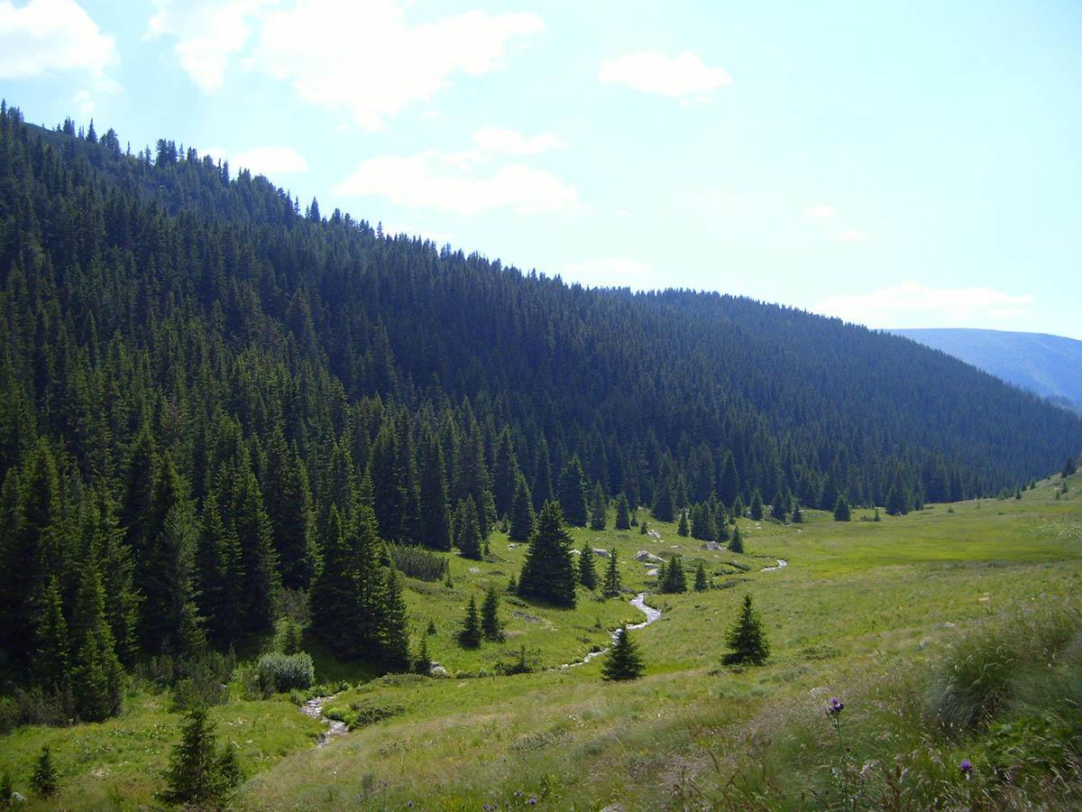 резерват Парангалица, Болгария