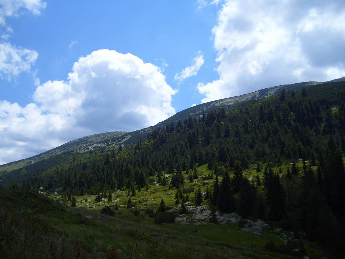заповедник Парангалица, нацпарк Рила, Болгария