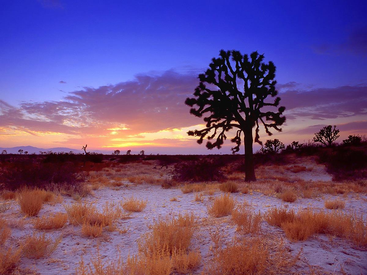 Mojave Desert, California, USA
