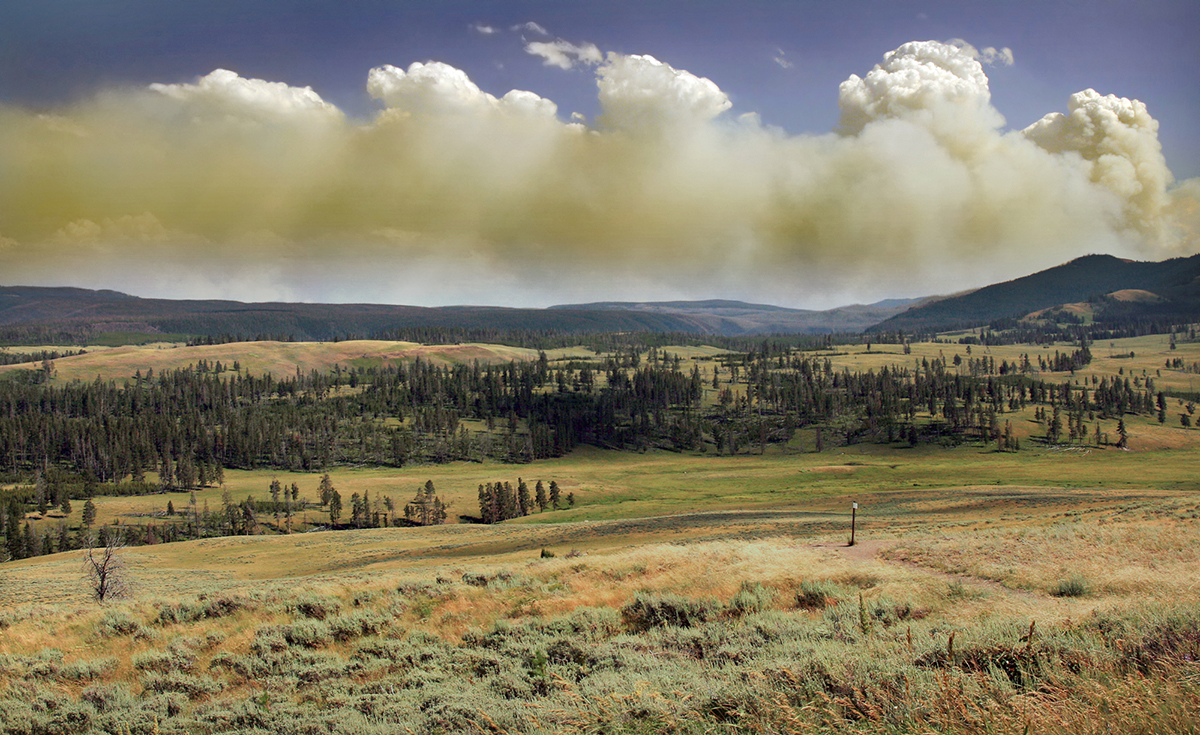Wildfire in Yellowstone National Park