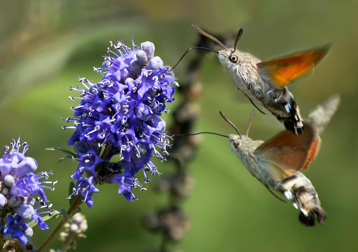 ВМосковском зоопарке бесплатно покажут кормление ночных бабочек