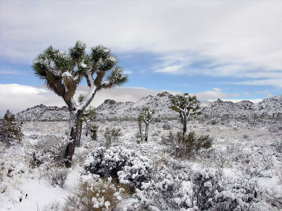 пустыня Мохаве зимой