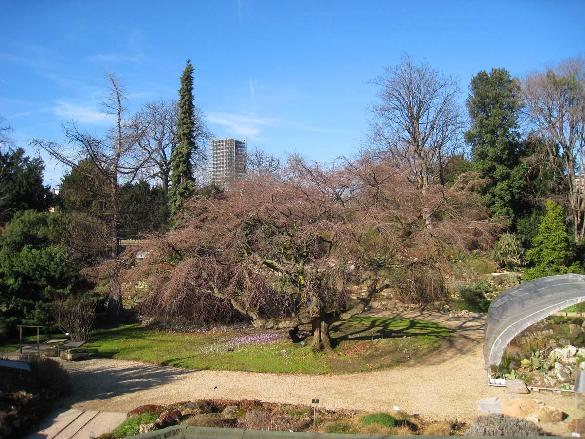 Jardin des Plantes de Paris, Alpine Garden