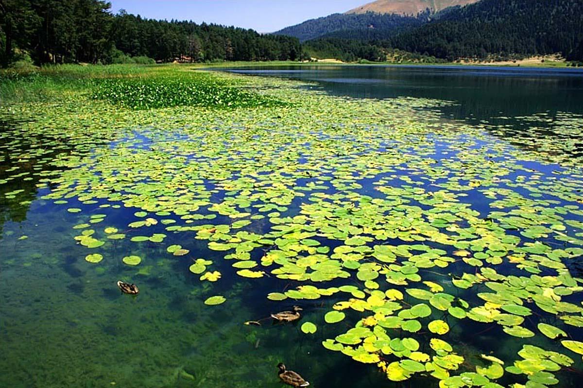 Природный парк озера Абант, Турция