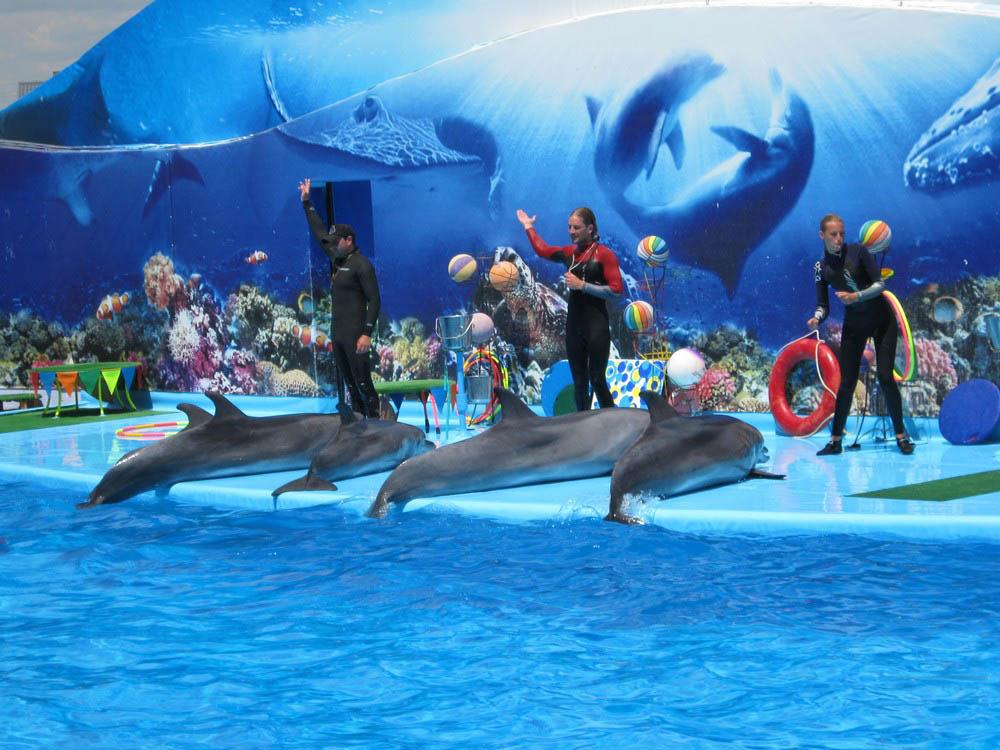 дельфинарий Оскар в Кирилловке, Акимовский район, Запорожская область, Украина