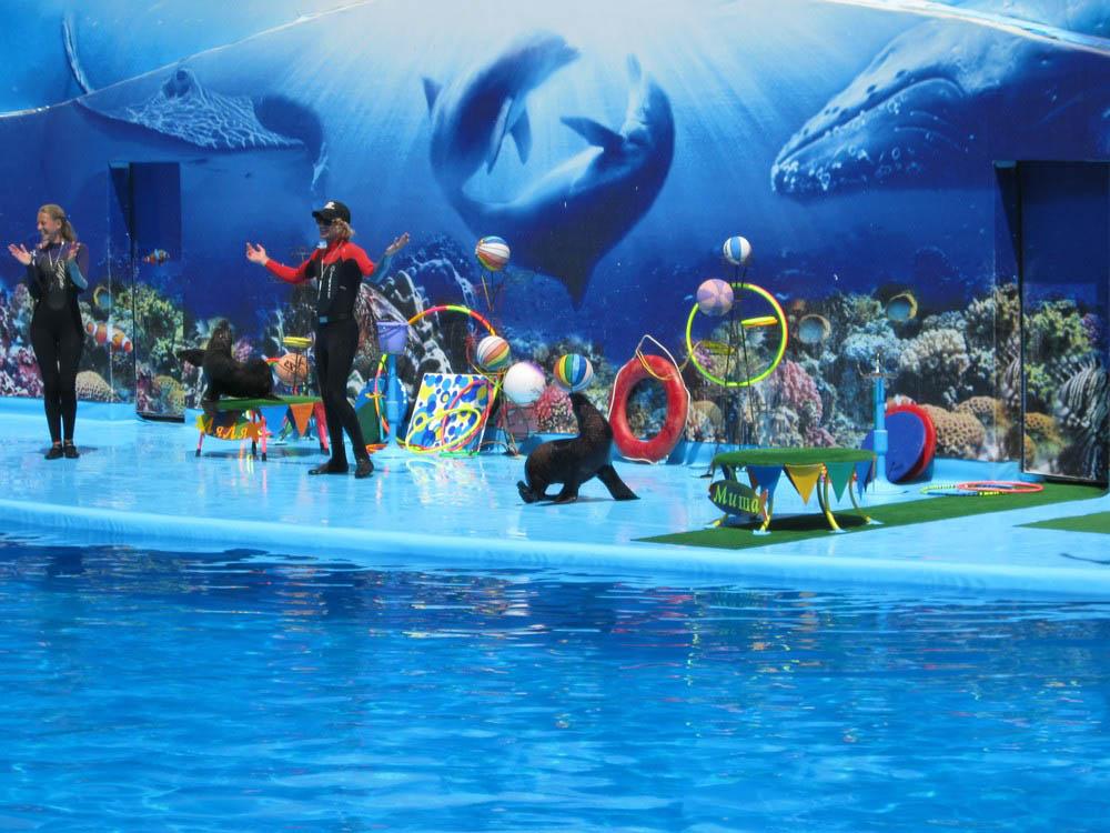 дельфинарий Оскар в Кирилловке, Запорожская область, Украина