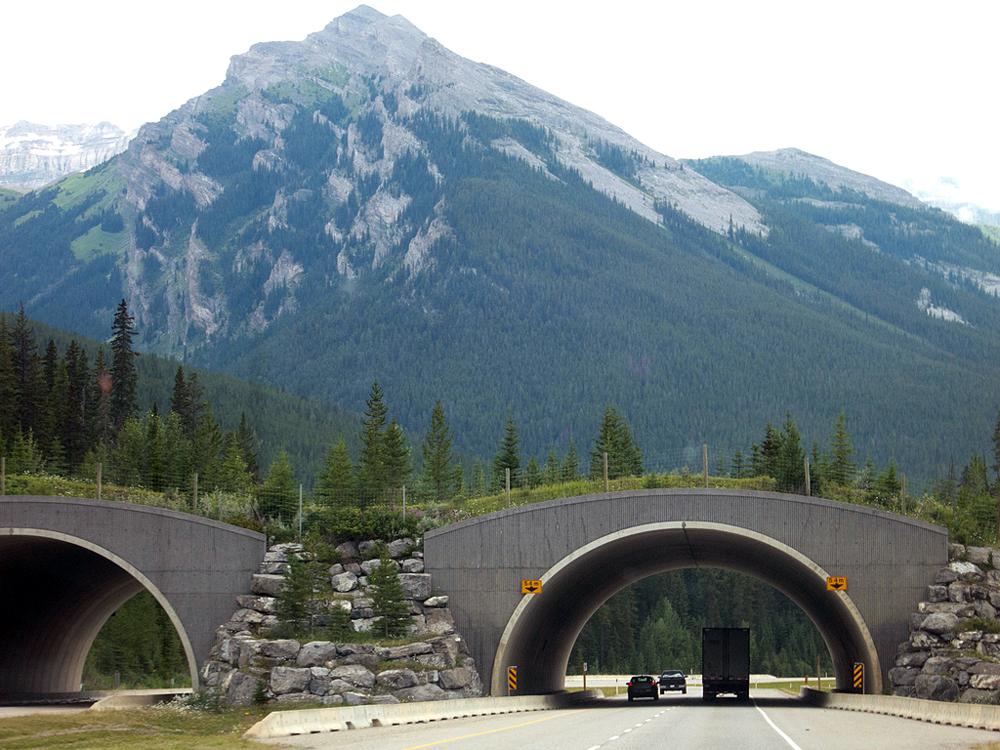 мост для животных в Канаде
