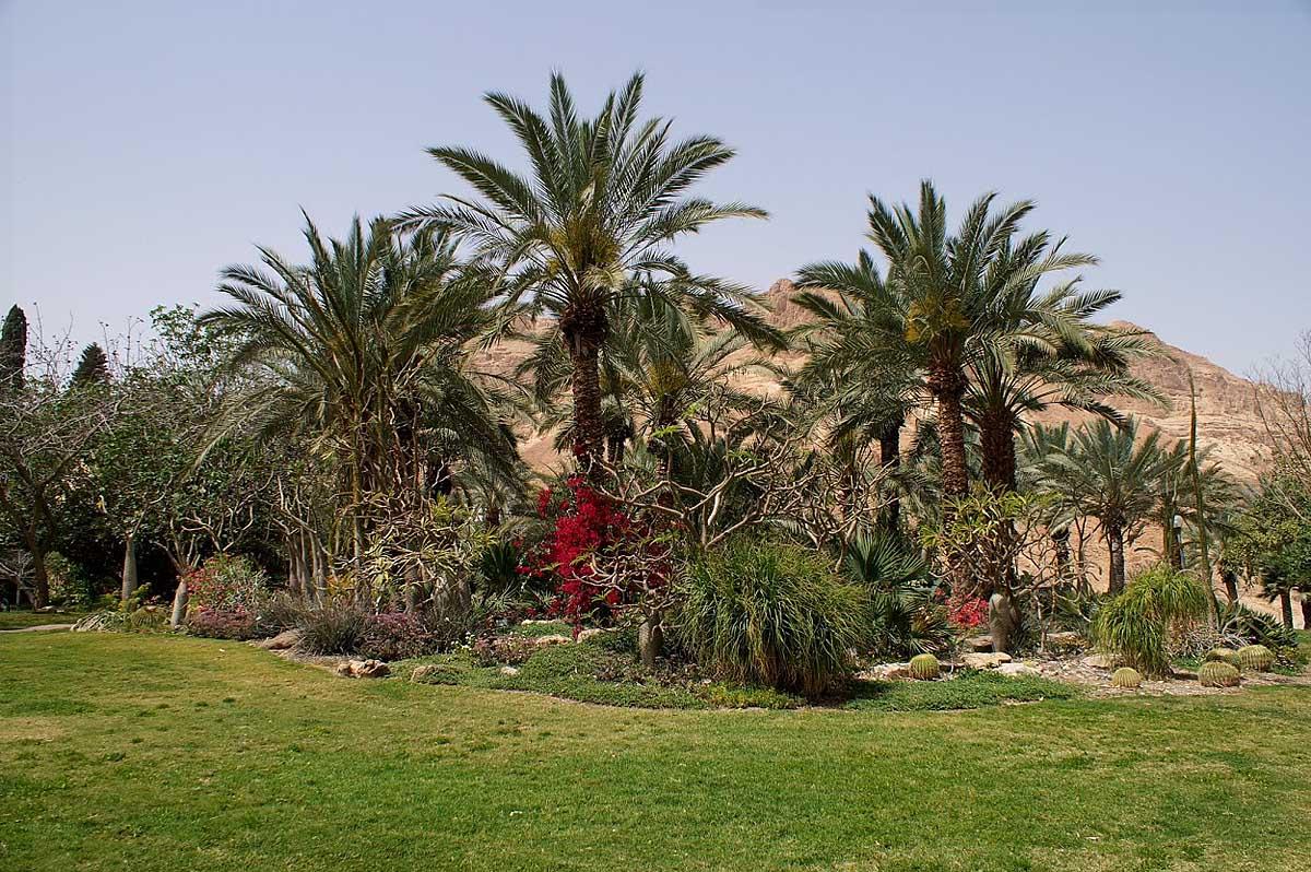оазис Эйн-Геди, Иерусалим