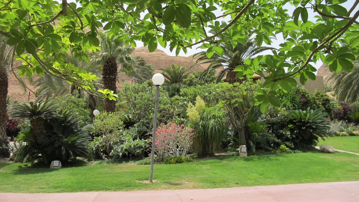 парк в Эйн-Геди