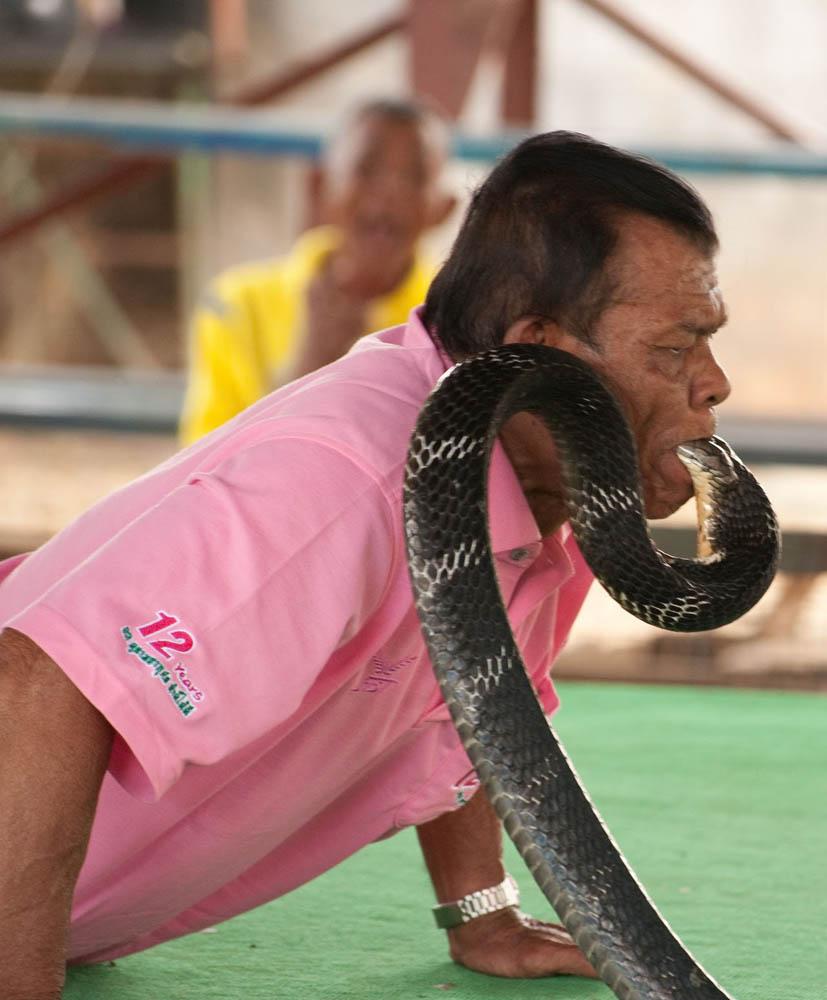 укротитель кобр Бьюли Чай в деревне Бан Кок Са-Нга, Тайланд