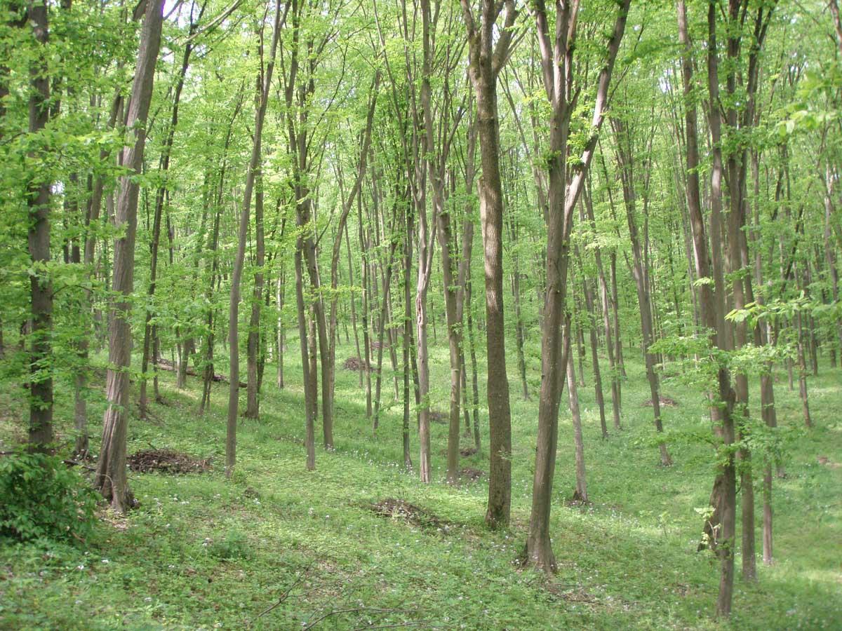 Прут в лесу 6 фотография