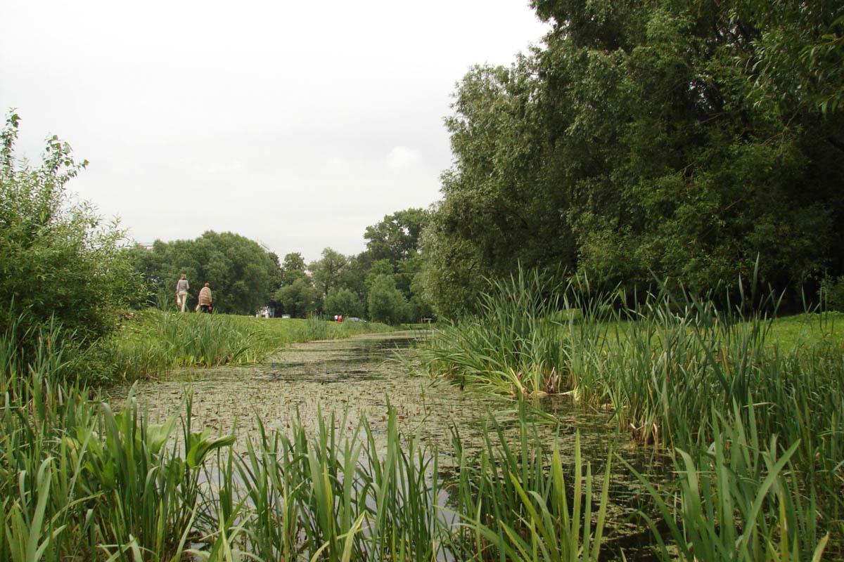 заросший пруд в Лефортовском парк, Москва, Россия
