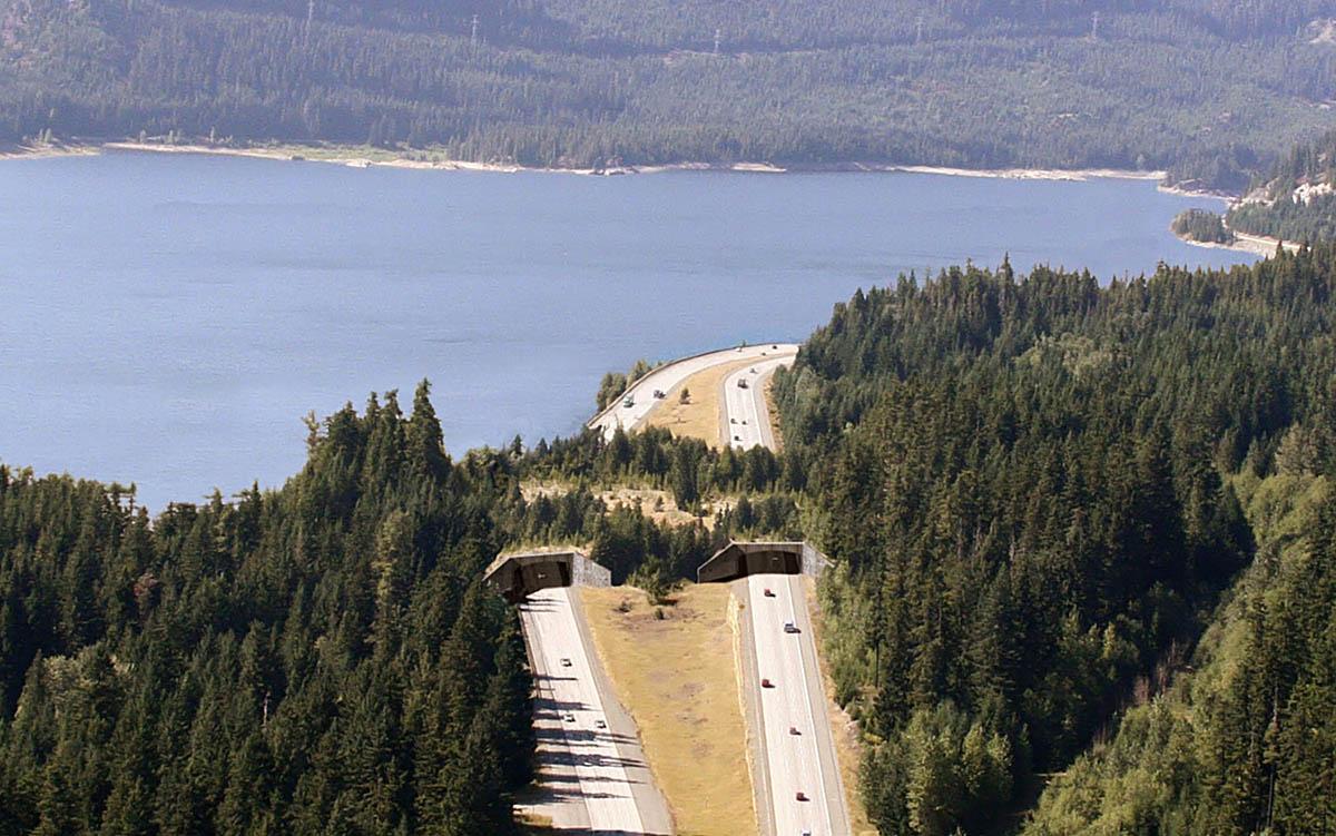 зеленый мост для животных