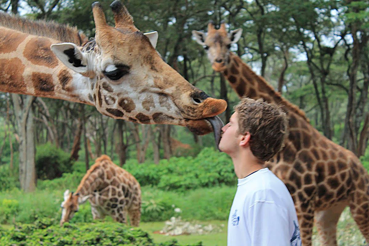 жирафы Ротшильда в эко-отеле Giraffe Manor