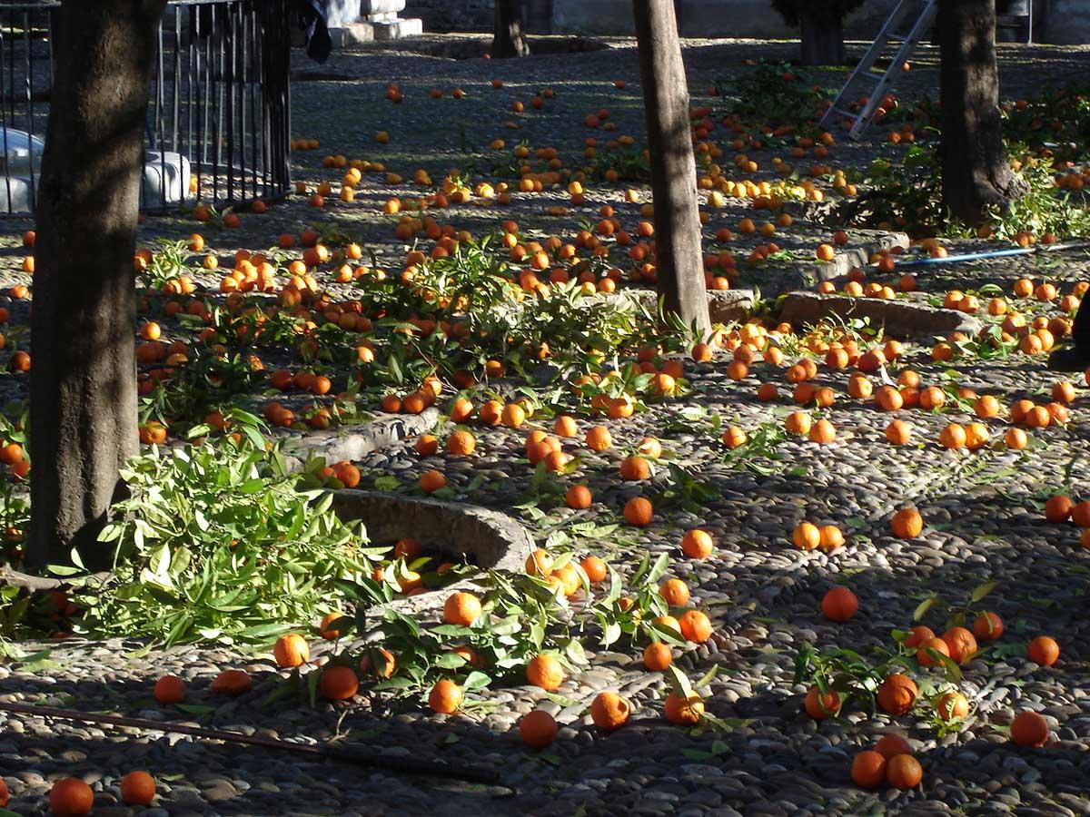 Апельсиновая война в Италии