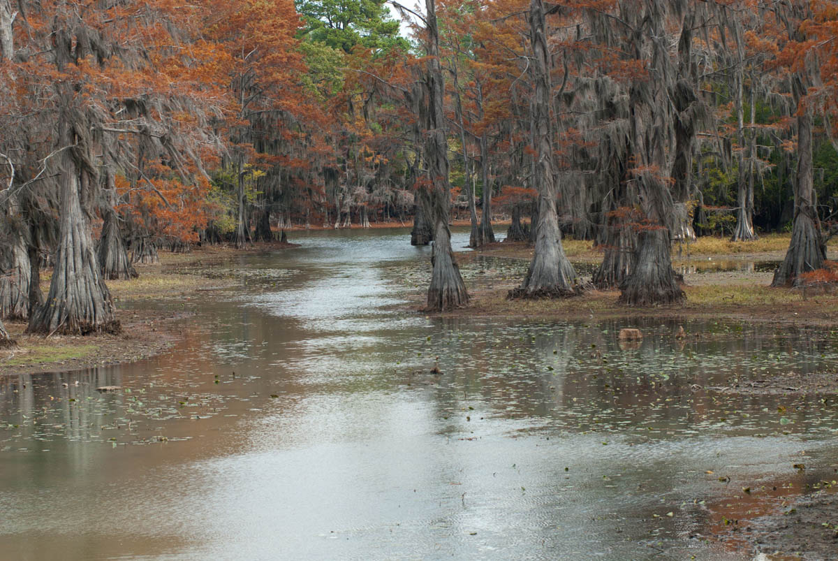 Caddo Lake, Texas, USA