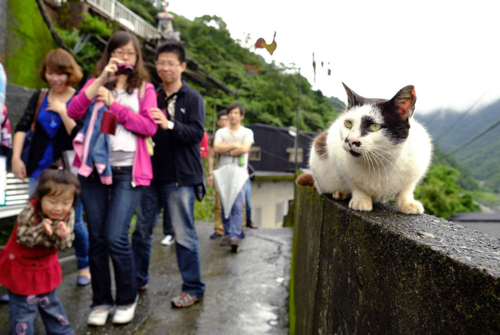 Хоутонг, Тайвань
