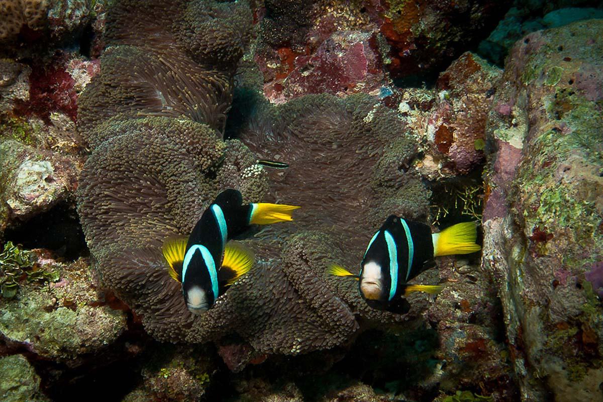 Reef Fotteyo