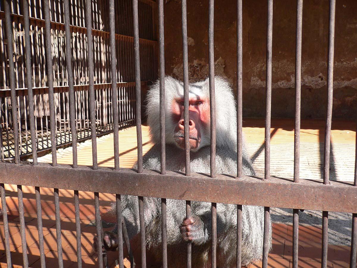 Сухумский обезьяний питомник