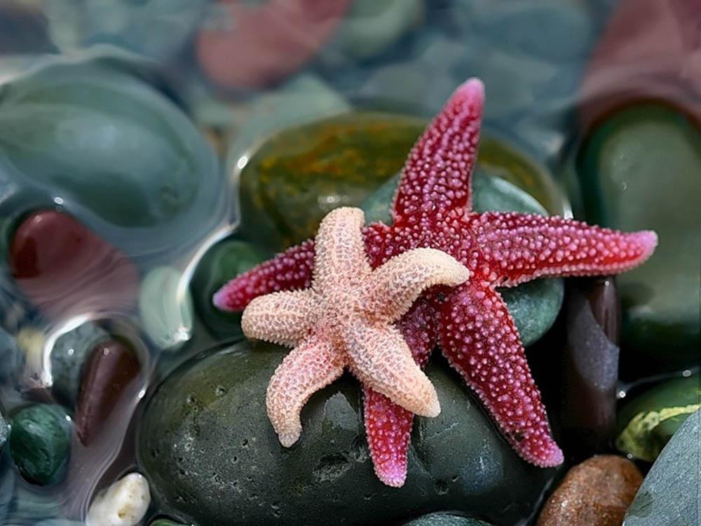 http://eco-turizm.net/uploads/2013/07/morskie-zvezdyi.jpg