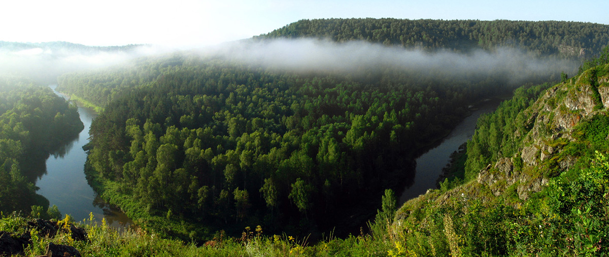 вырубка леса в академгородке: