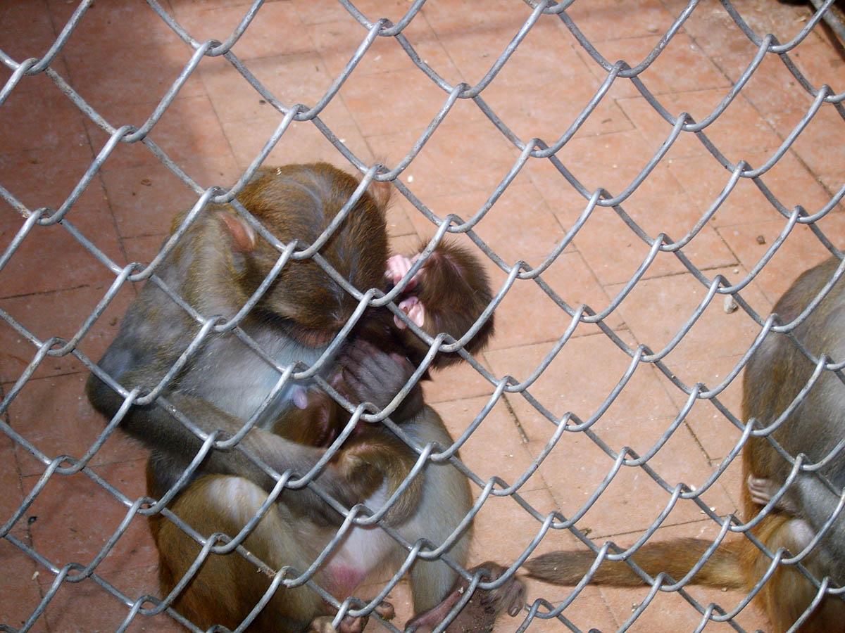 обезьяний питомник в Сухуми, Абхазия