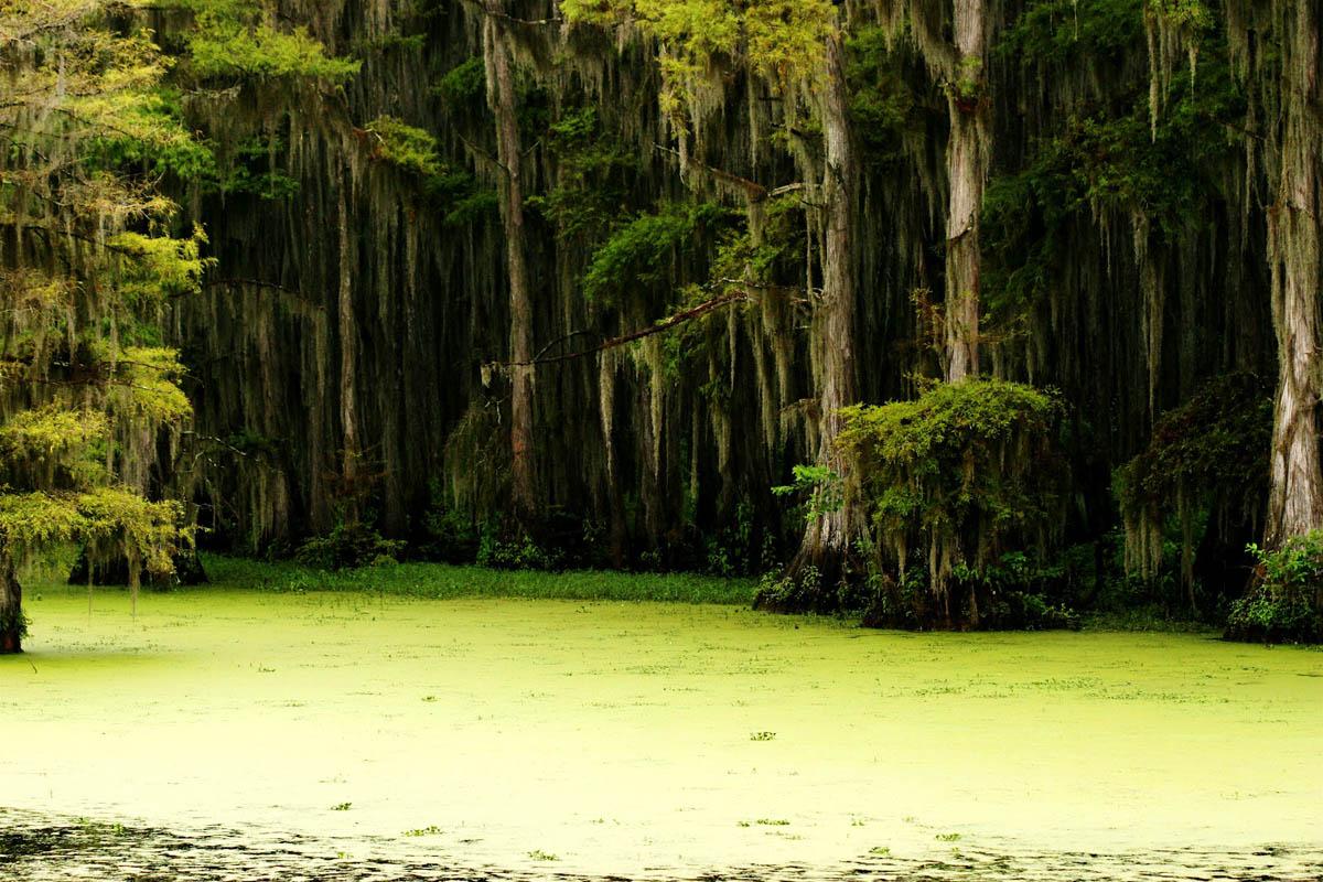 озеро Каддо, Техас