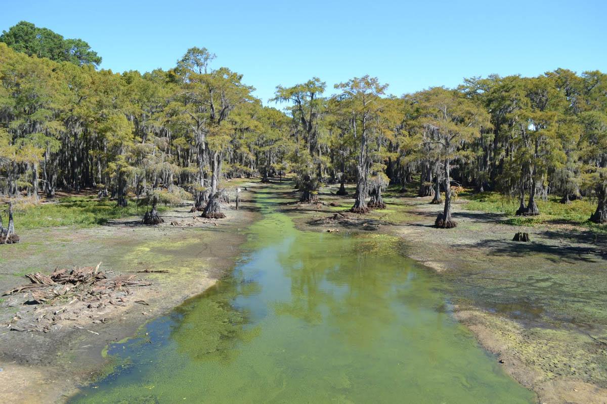 озеро Каддо в Техасе