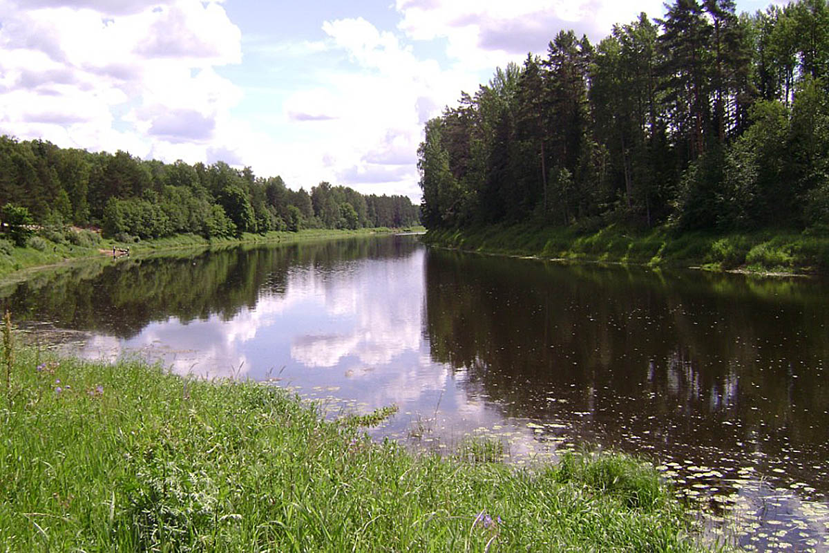 памятник природы Истоки реки Оредеж в урочище Донцо, Ленинградская область
