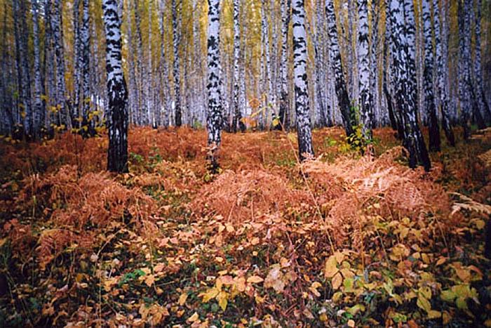 парк Гагарина в Тюмени осенью