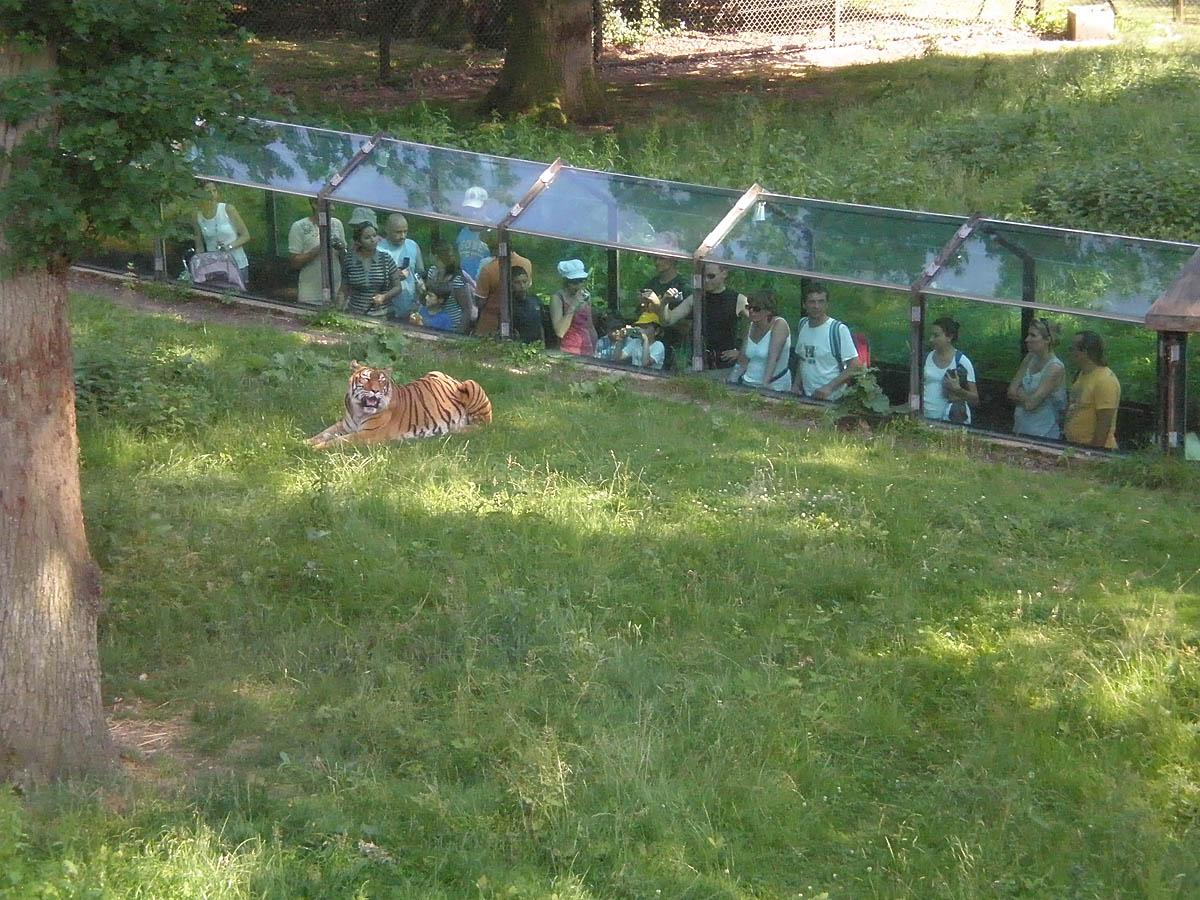 прозрачный туннель в парке Туари