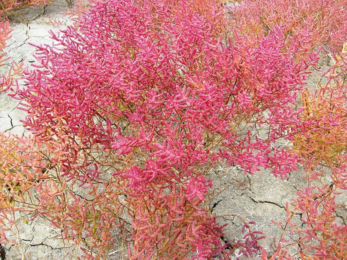 растительность на месте высохшего Ханского озера
