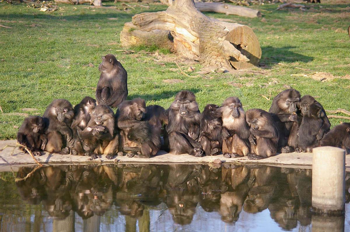 сафари-парк Туари, Франция