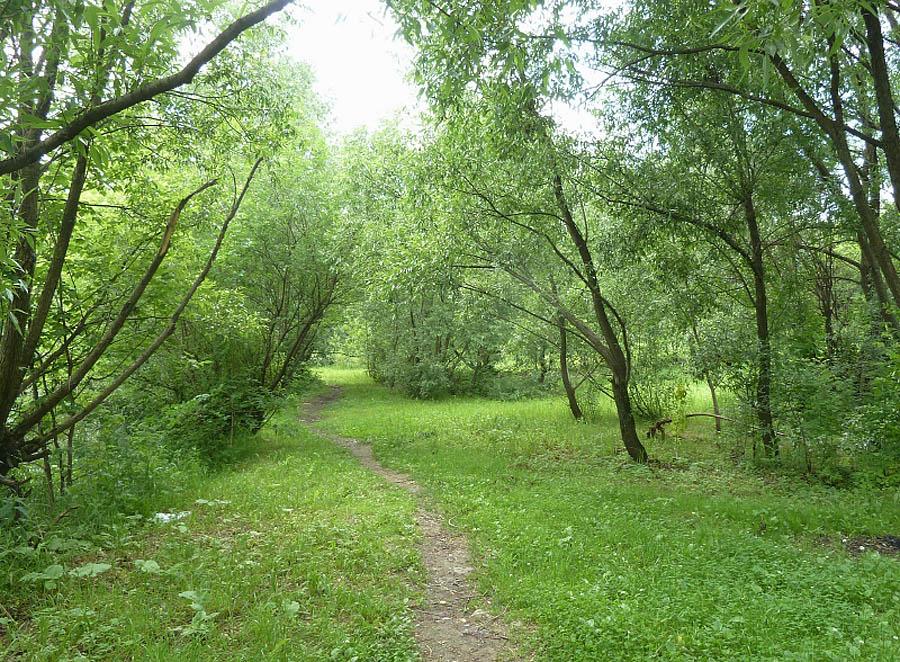 усадебный парк Медведково