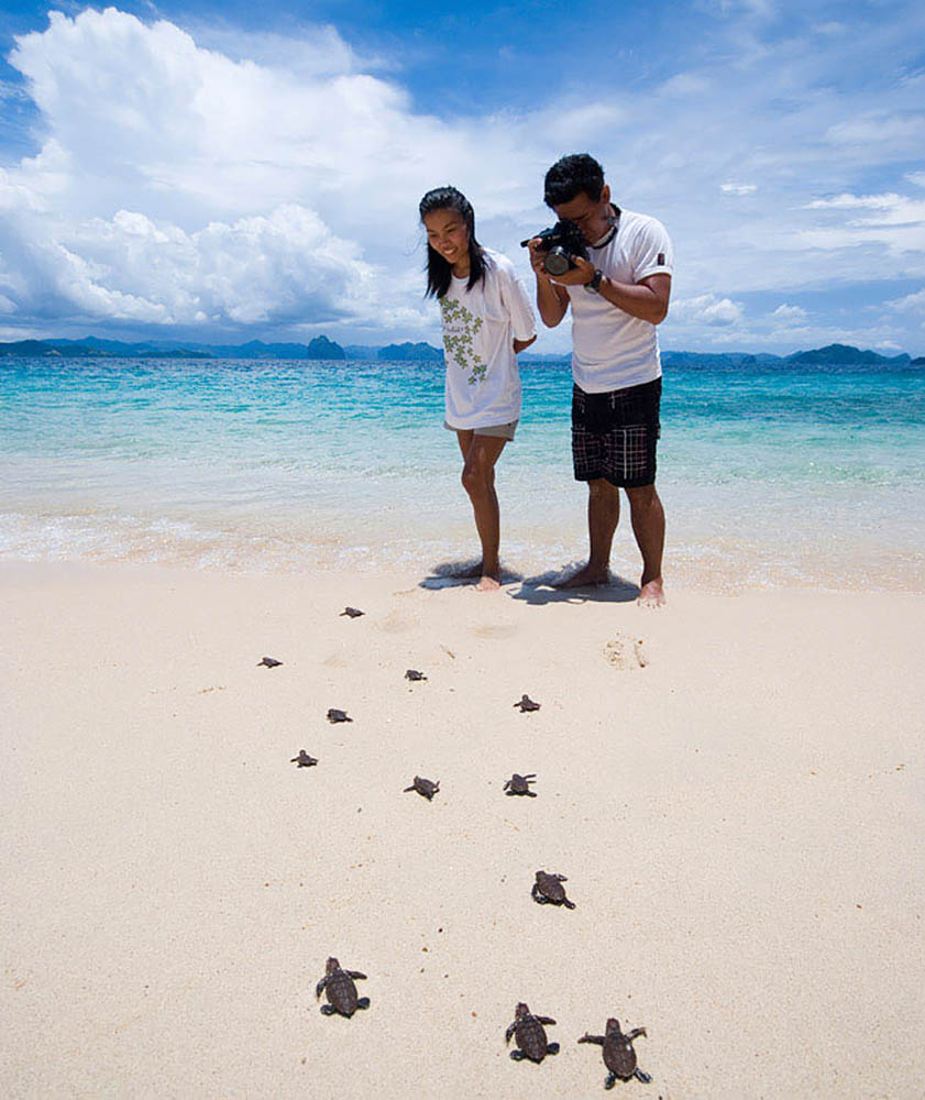 El Nido, Turtle tracking tour