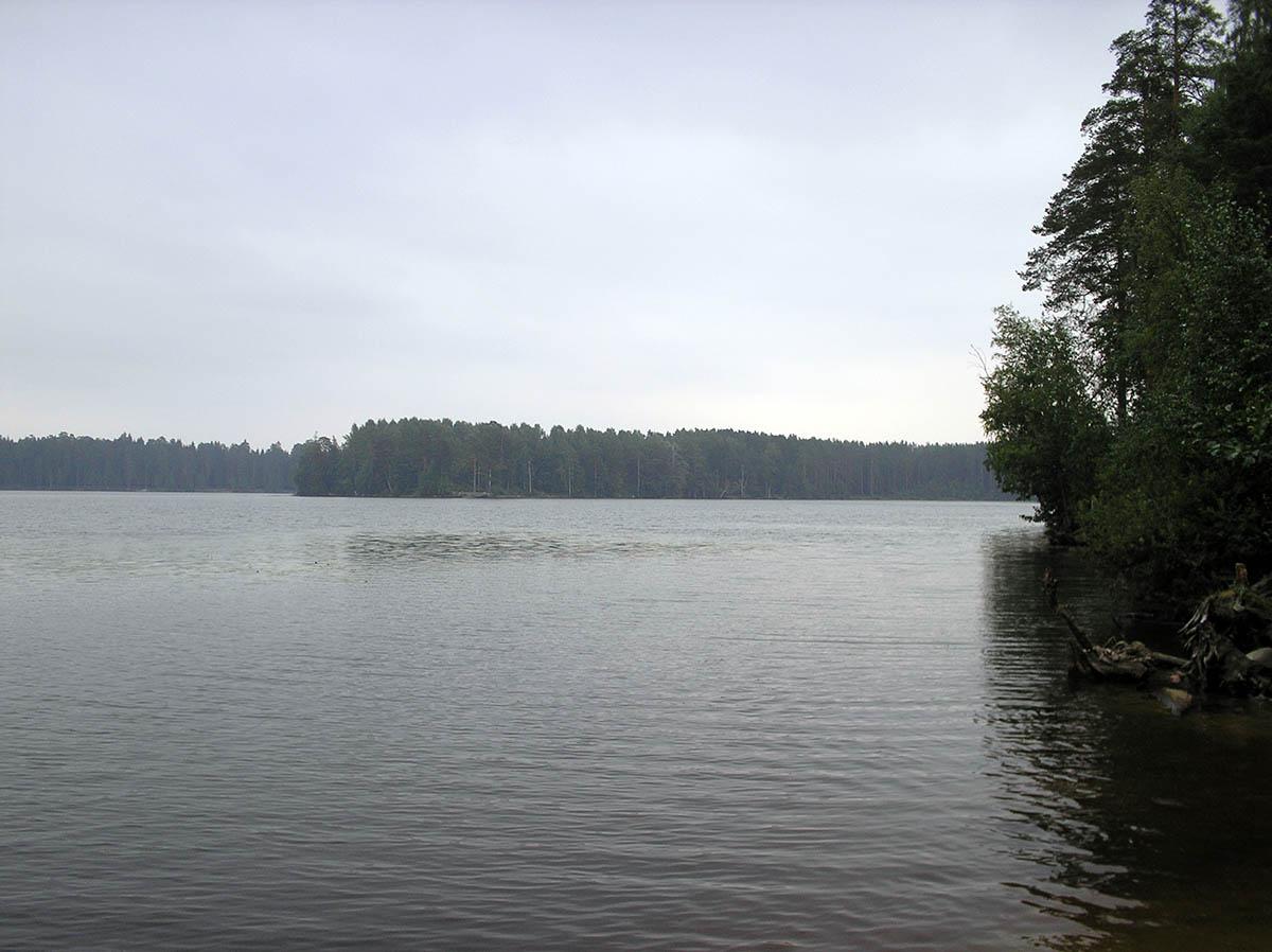 озеро Щучье (Комарово)