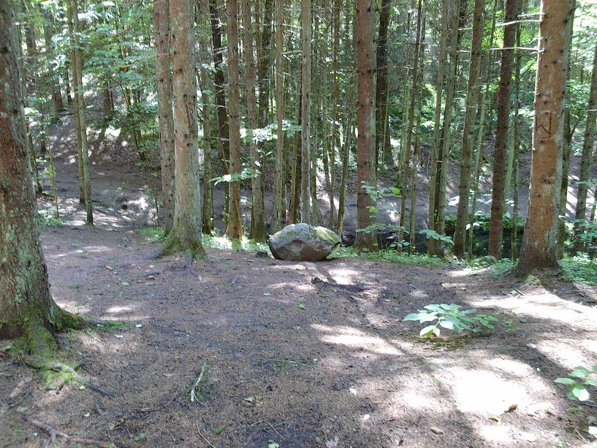 Покайнский лес в Латвии
