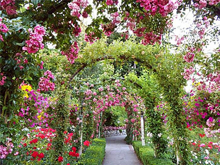 ботанический сад Донецка